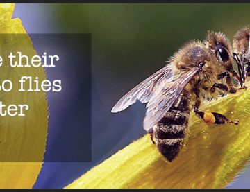 You are unique: Live your life like the bees.